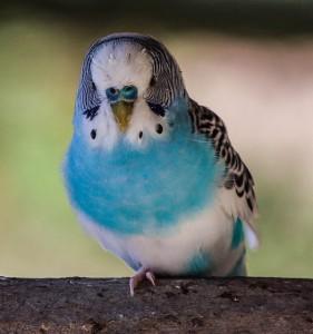 bird-204842_640