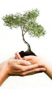 Tree - Hands2