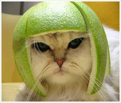 Sour cat - I need a G & T!