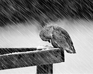 bird-in-the-rain-1024x819
