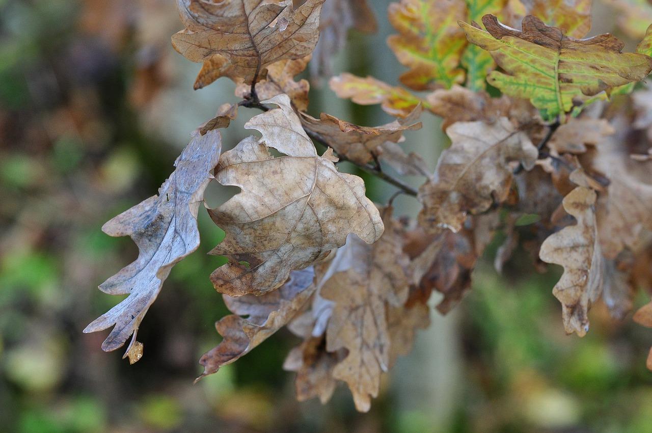 leaves-504018_1280